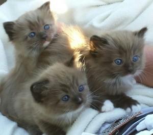 Jenny's 3 babies